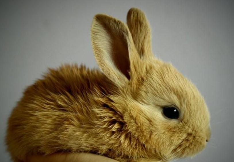 die Lebensdauer eines Kaninchens