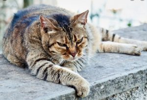 Ihre Katze stirbt erkennen Sie es früh genung - Wissen